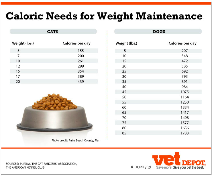 An In Depth Look At Weight Management For Pets