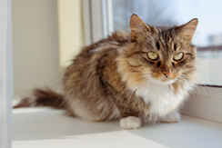 Cat Breed Guides