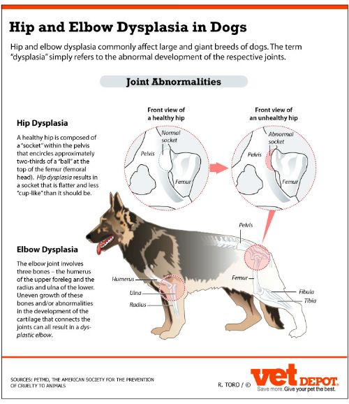 How To Treat Elbow Dysplasia In Dogs