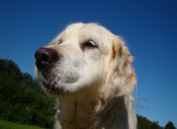 Liver Toxins In Dogs Treating