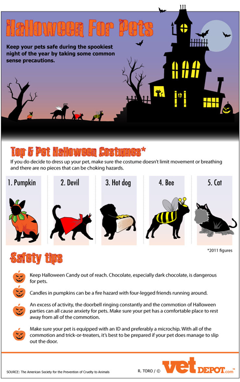 Halloween Pets Infographic Halloween Pet Safety