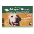 Adequan for Dogs & Horses