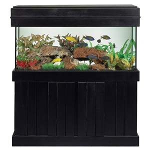 Aquarium stand 60 x 24 next in rectangular pine fish for Google fish tank mrdoob