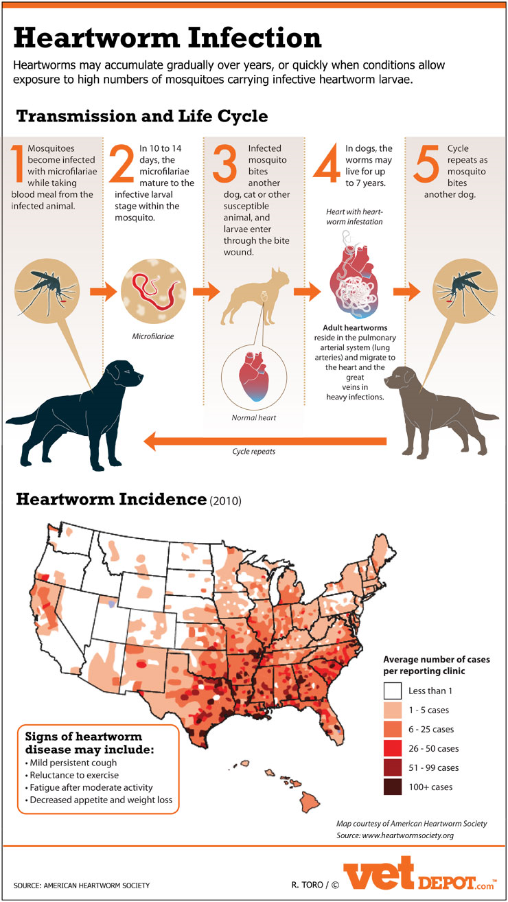 Heartworm Infection in the USA