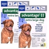 Advantage II for Dogs 55-100 lbs, 12 Pack (Blue)