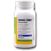 Amoxicillin 100 mg, 500 Tablets