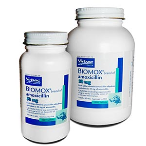 Biomox 50 mg, 1000 Tablets (amoxicillin)