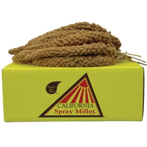 California Golden Spray Millet, 25 lb