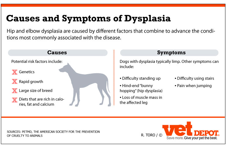 Elbow Hip Dysplaysia In Dogs