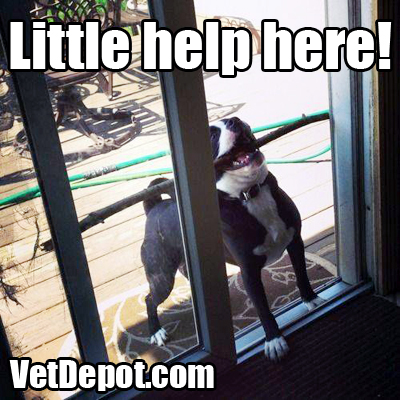 VetDepot caption contest winner 56