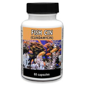 Fish Cin Clindamycin 150 Mg 60 Capsules Vetdepot Com