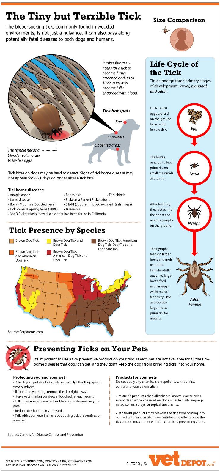 The Tiny But Terrible Tick Infographic Vetdepot Com