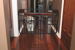 Design Studio Expandable Gate with Door- Medium