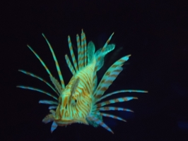 Eshopps Glow-in-the-Dark Lionfish Floating Aquarium Ornament