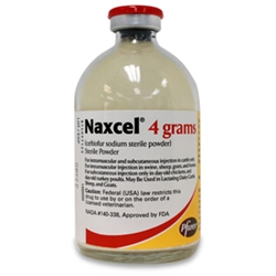 Naxcel Injection, 80 mL | VetDepot.com